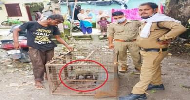 ऋषिकेश के आबादी वाले इलाकों में अक्सर जंगली जानवर आ जाते हैं। इन जानवरों से लोगों को अपनी जान का खतरा भी बना रहता है।