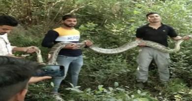 रुड़की के केल्हनपुर गांव में एक बड़ा अजगर पकड़ा गया है। गांव में अजगर दिखने के बाद हड़कंप मच गया।