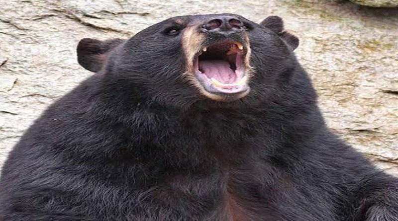 चमोली के विकासखंड घाट के वादुक गांव में भालू का आतंक देखने को मिला है। गांव के पास मवेशियों के लिए घास लेने जंगल जा रही महिला को भालू ने हमला कर दिया।