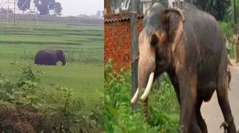 नैनीताल में जंगली हाथी ने बुजुर्ग को उतारा मौत के घाट, परिवार में पसरा मातम