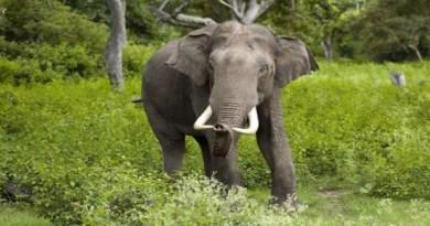 नैनीताल के हल्द्वानी तहसील में इन दिनों हाथियों के आतंक से लोग काफी परेशान हैं। तराई पूर्वी वन प्रभाग में इन दिनों हाथी लोगों ग्रामीणों को निशाना बना रहे हैं।