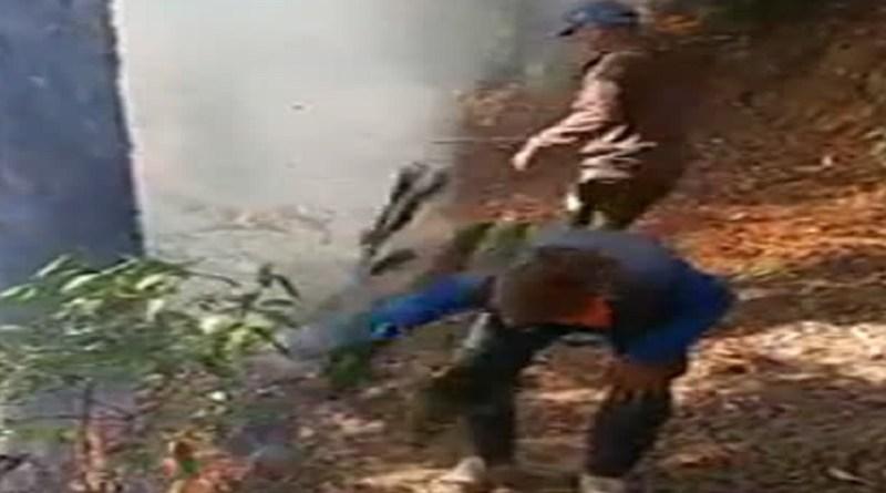 चमोली: जंगलों में हो रहा चीड़ का अवैध पातन, कुंभकर्णीय नींद सो रहा वन विभाग!