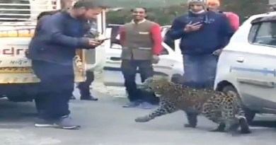 हिमाचल के तीर्थन वैली का एक वीडियो सोशल मीडिया पर तेजी से वायरल हो रहा है। जिसमें लोग तेंदुए का मजे से वीडियो बनाते नजर आ रहे हैं।