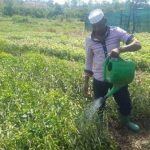 Haruna Mubiru, Farming