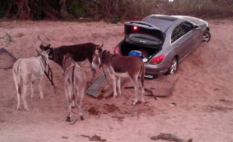 Donkeys Used To Smuggle Luxury Vehicles Into Zimbabwe