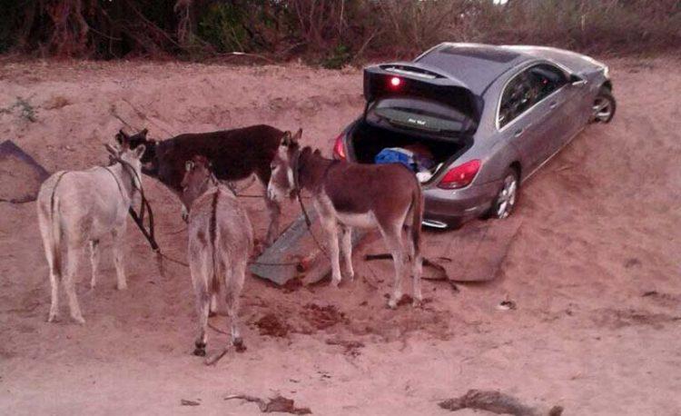 Donkeys Used To Smuggle Luxury Vehicles Into Zimbabwe
