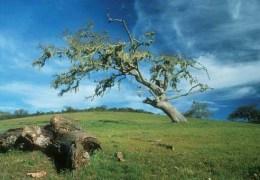 Oak Recovery