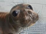 Pupping Season at Marine Mammal Center