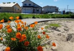 Rebirth for Coffey Neighborhood Park