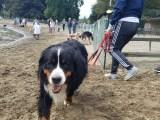 Woof!  Water Bark Brings Pups to Spring Lake