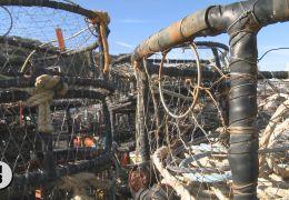 Whales Linger, Bodega Crab Fleet to Delay Opener