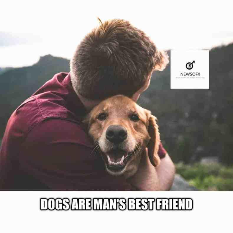 dogs are man's best friend meme