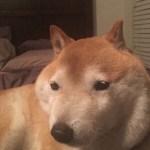 【画像あり】Twitter民「母が100均グッズで犬小屋作った」