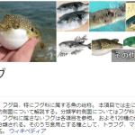 釣り人「お、フグ釣れたやんけ! 焼いて食べたろ!w」結果→