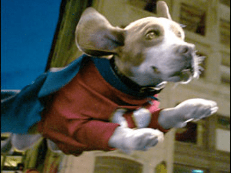 Fly Like a Beagle: Underdog puts on airs.