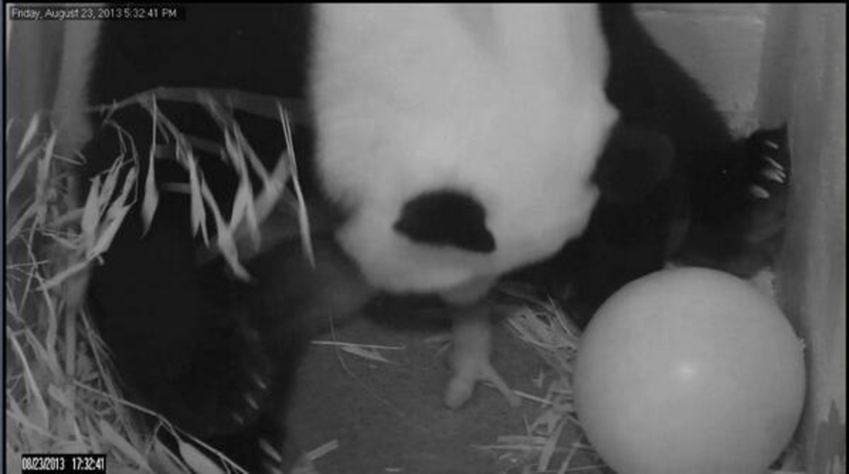 Remember when Bao Bao was just born?