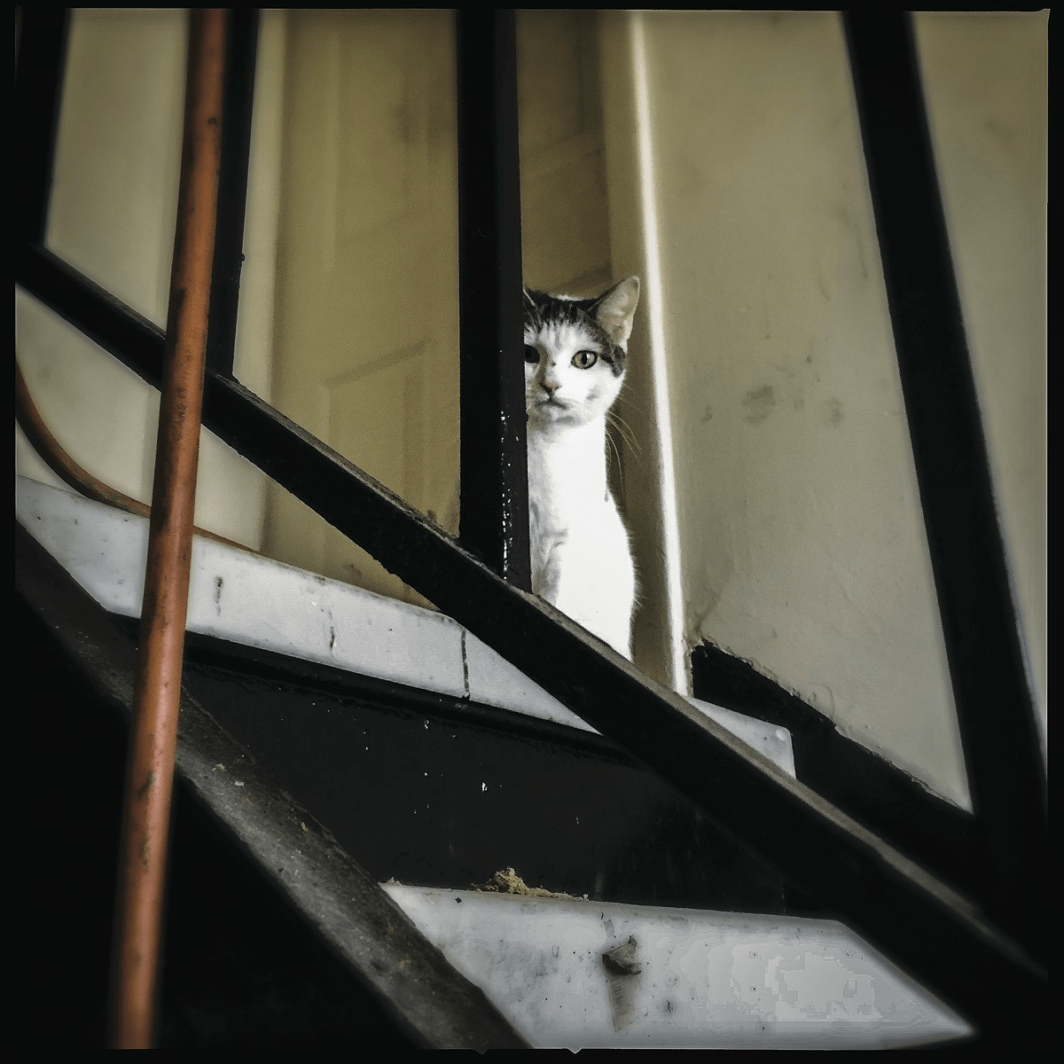 A stray cat inside Terrace Manor, one of Sanford Capitals properties.s properties.