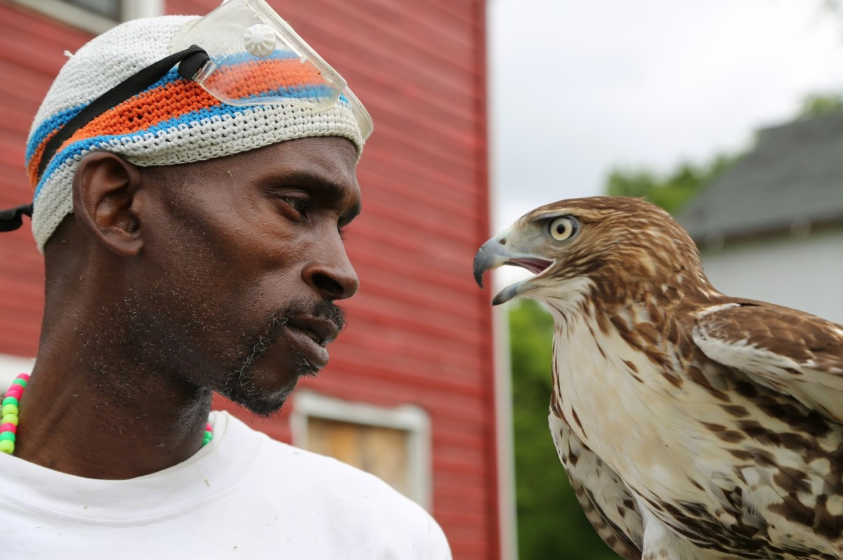 A still from The Falconer, a film at the DC Environmental Film Festival.