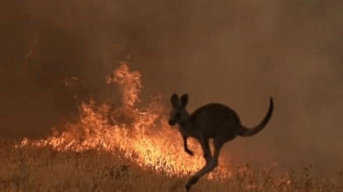 Aussie-Fires