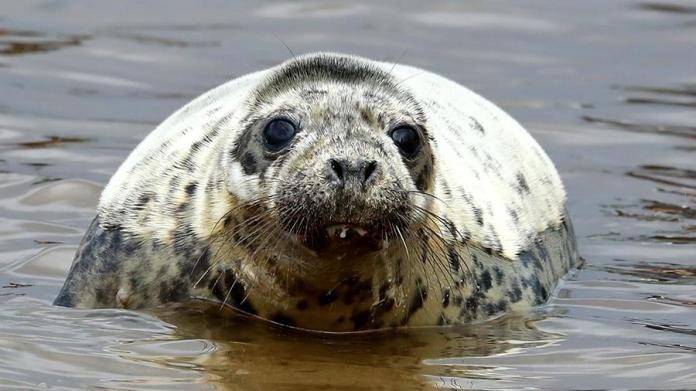 Ученые назвали возможную причину гибели тюленей в Каспийском море