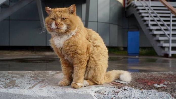 Умер ставший легендой Шпицбергена кот Кеша