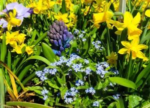 Сотрудник ботанического сада МГУрассказал об опасных для человека комнатных растениях