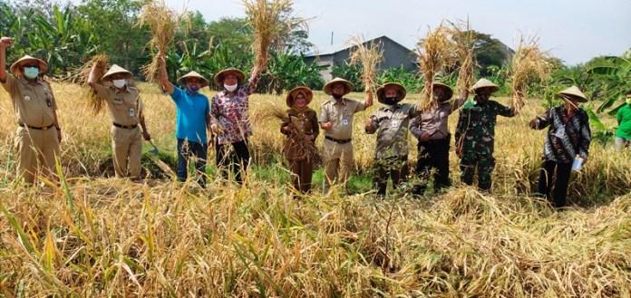 lahan-pertanian-jawa
