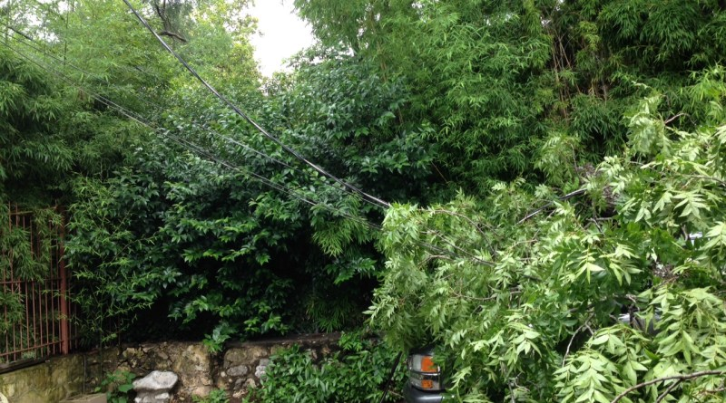 (Image) Trees down power lines over truck
