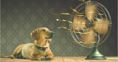 Small steps to save during the dog days of summer