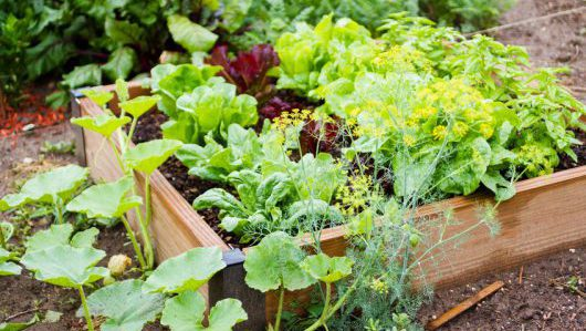 One Magic Square: how small home gardens can increase vegetable consumption