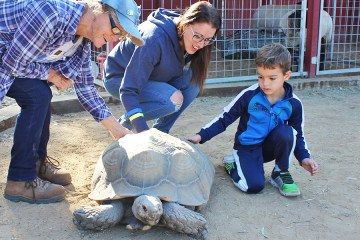 students and adult pet a turtle
