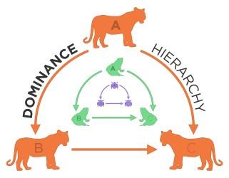 Social Hierarchy Animals