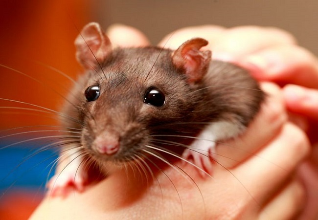 After Coronavirus, new Hantavirus emerges in China, 1 killed