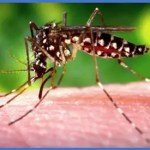 Two cases of Chikungunya confirmed in Guyana
