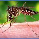 Two cases of Chikungunya confirmed in Guyana