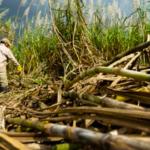 BUDGET 2017: Struggling sugar industry to receive $9 Billion