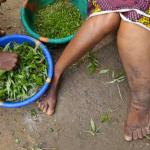 Efforts underway to make Guyana Filaria free by 2022
