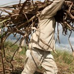 GAWU demands severance pay for Wales sugar workers before transfer to Uitvlugt
