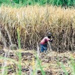 """PSC """"dismayed"""" that government moving ahead with closure of some sugar estates"""