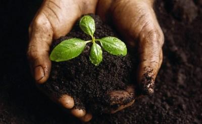 fertilizers - Nigeria's fertilizer consumption rose by 63% in 2017 : report