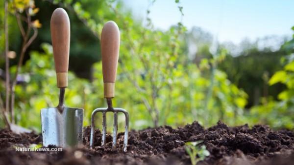 圖像:人從自己的花園吃食物,避免化療來治愈自己的肺癌