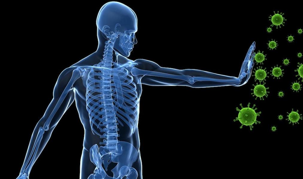 圖像:研究顯示禁食再生受損的免疫系統