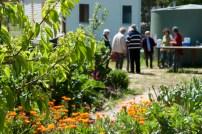 Spring in the Newstead Community Garden