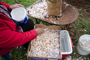 Thanks to Ron and Julia we sowed 3kg of garlic from Harmony Organics in wet conditions.