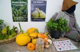 Rosemary Garden hosts the stall at the Volunteers Expo May 2017