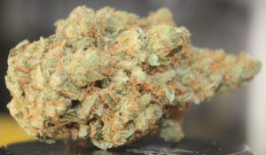 super-silver-haze-strain-Top-Weed-Strains
