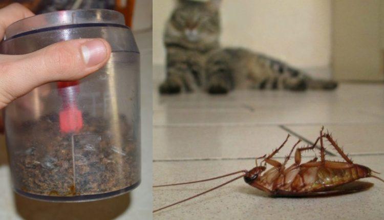 Κατσαρίδες Τέλος. Εξαφανίστε τις Κατσαρίδες από το Σπίτι σας με το Κόλπο με τον Καφέ