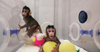 Scientists clone monkeys, raising excitement and concern 3