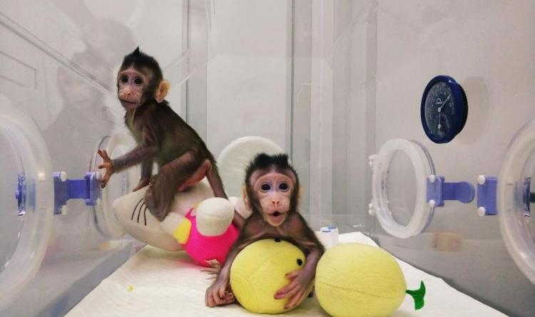 Scientists clone monkeys, raising excitement and concern 1