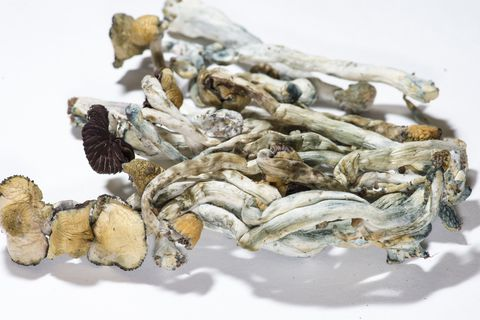 How Psilocybin—A.K.A. Shrooms—Could Become the Next Legalized Drug 8